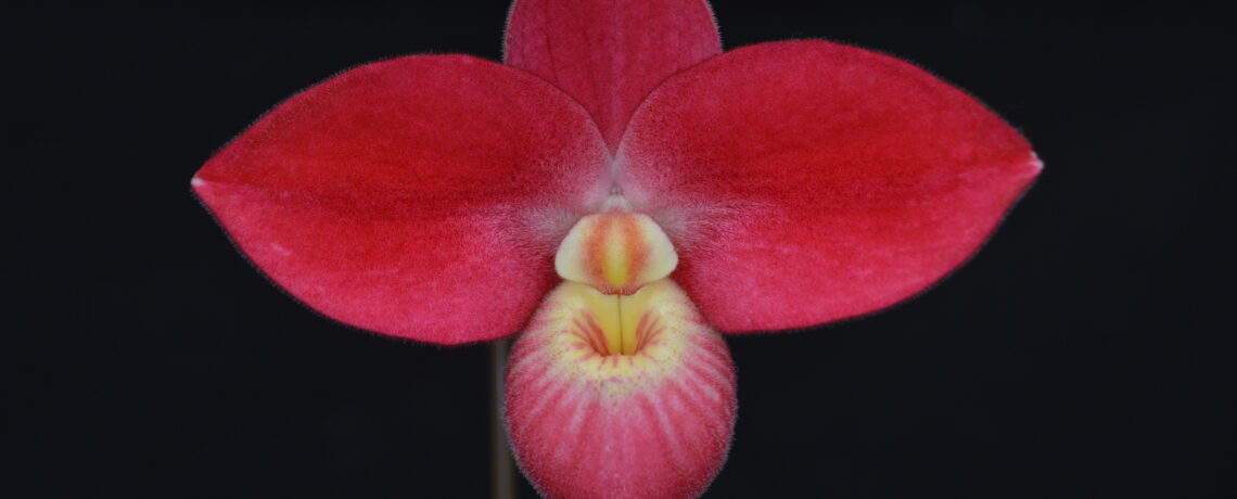 Orchids Limited